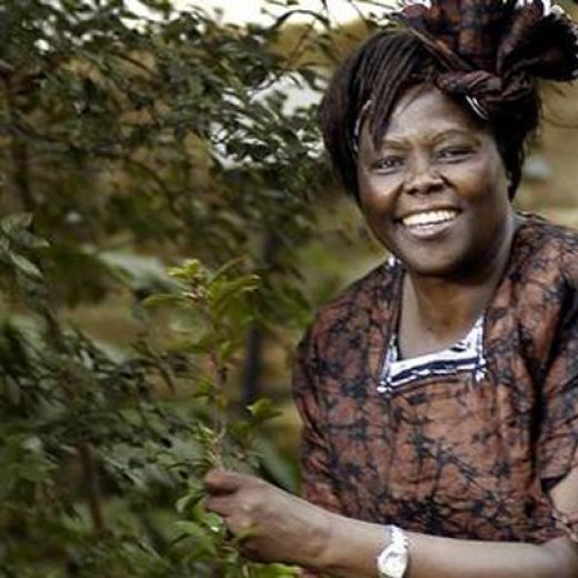 essay on wangari maathai Writing assignment 5 – after viewing the documentary, reading the book, and perusing the website on dr wangari maathai and the greenbelt movement, write a detailed 700+ word essay on the relationship of maathai's work in kenya with environmental and political security.